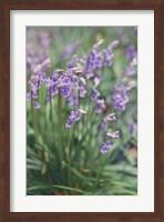 Framed Spring Flowers