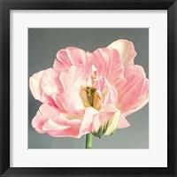 Framed Pink Bloom