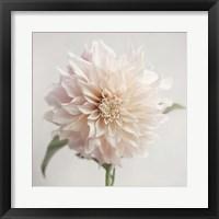Framed White Bloom From The Garden