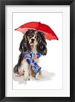 Framed King Charles Spaniel In The Rain