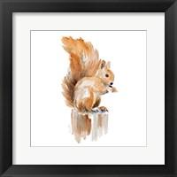 Framed Watercolor Squirrel