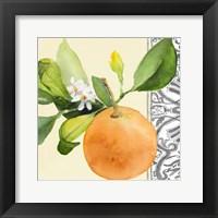 Framed Orange Blossoms II