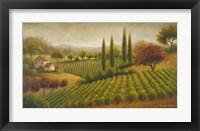 Vineyard In The Sun I Framed Print