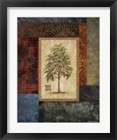 Eucalyptus Tree I Framed Print