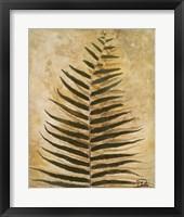 Ferns III Framed Print