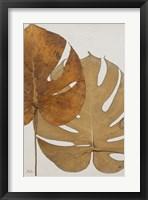 Dry Balazo II Framed Print
