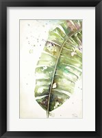 Framed Watercolor Plantain Leaves II
