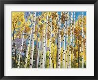 Framed Aspen In Blue Sky