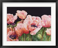 Framed Breckenridge Poppies