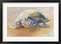 Framed Tilly the Turtle