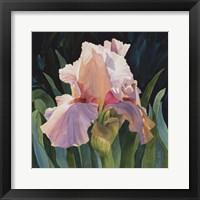 Framed Pink Iris