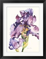 Framed Purple Iris with Bud
