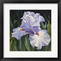 Framed White Iris
