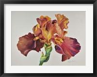 Framed Orange Glow Iris
