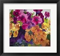 Framed Petunias and Pansies