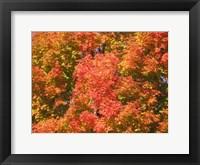 Framed Fall Fury