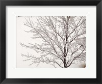 Framed Winter Serenity