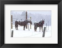 Framed Snowy Corral