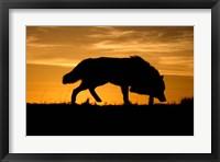 Framed Sunset Wolf
