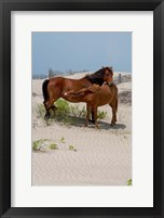 Framed Corolla Mare and Yearling