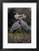 Framed Great Blue Heron