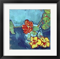 Framed Nasturtium on Blue