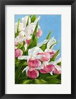 Framed Pink Lady Slipper Flowers