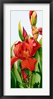 Framed Red Iris
