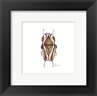 Framed Bug #10