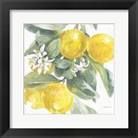 Citrus Charm Lemons I Framed Print