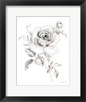Sketchbook Garden IX BW Framed Print
