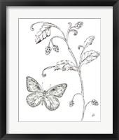 Outdoor Beauties Butterfly II Framed Print