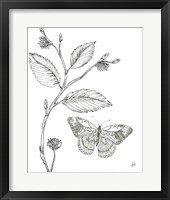 Outdoor Beauties Butterfly I Framed Print