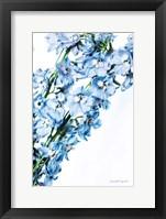 Freshly Picked Delphinium IV Framed Print
