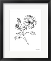 Joyful Peonies III Framed Print