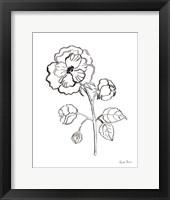 Joyful Peonies II Framed Print
