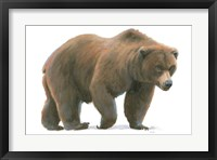 Northern Wild  I Framed Print