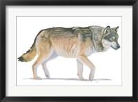 Northern Wild II Framed Print