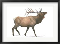 Northern Wild III Framed Print