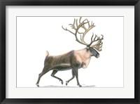 Northern Wild IV Framed Print