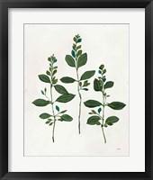 Botanical Study IV Greenery Framed Print