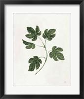 Botanical Study III Greenery Framed Print