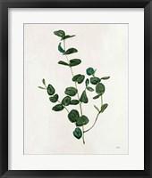 Botanical Study II Greenery Framed Print