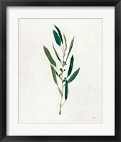 Botanical Study I Greenery Framed Print