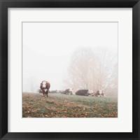 Framed Misty Pasture