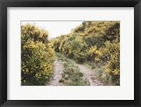 Framed Scottish Highlands II