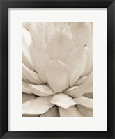 Framed Agave Neutral 1