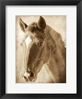 Framed Wild Stallion 1