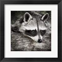 Framed Pondering Raccoon 2