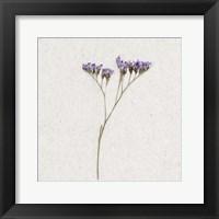 Framed Dainty Purple 1